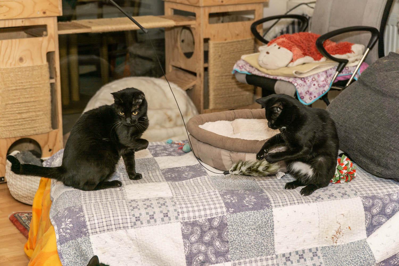 Tierschutz Katzen Vermittlung rund um Köln