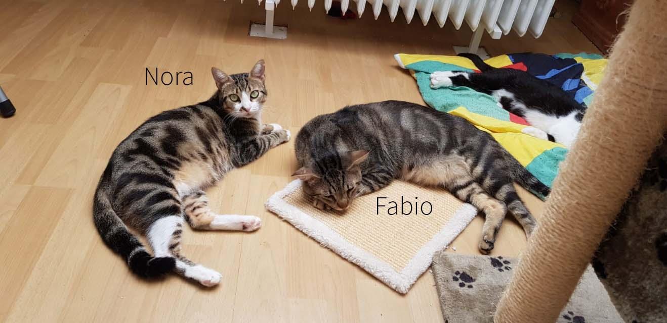 Fabio+Nora Beitragsbild1