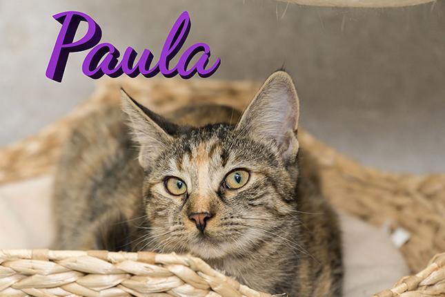 Paula-Charly Artikel (1)