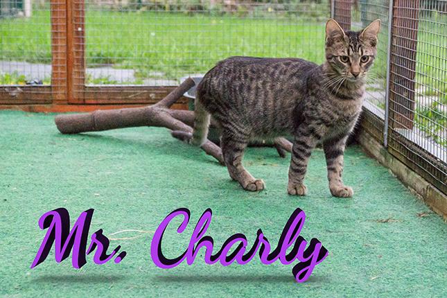 Paula-Charly Artikel (2)