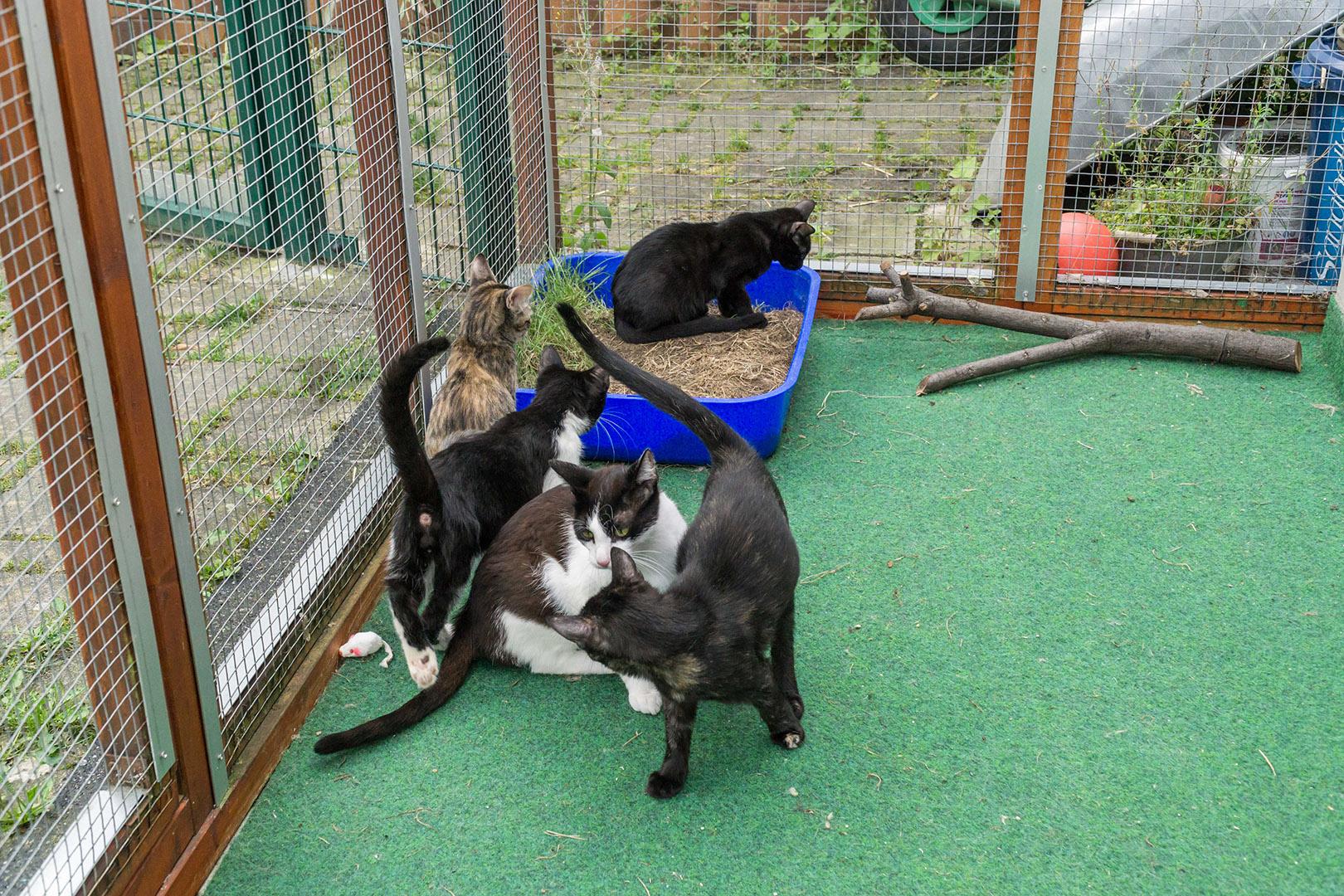 Pflege Katzen Gruppe (1)