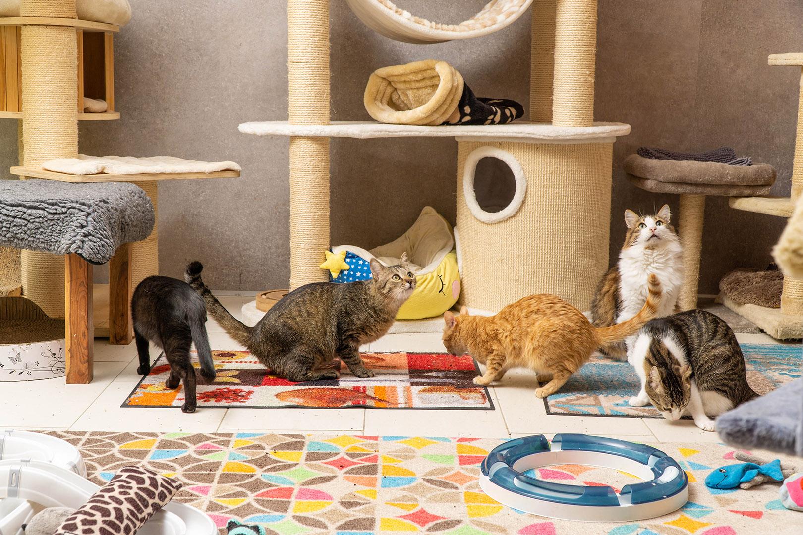 Pflege Katzen Gruppe (10)