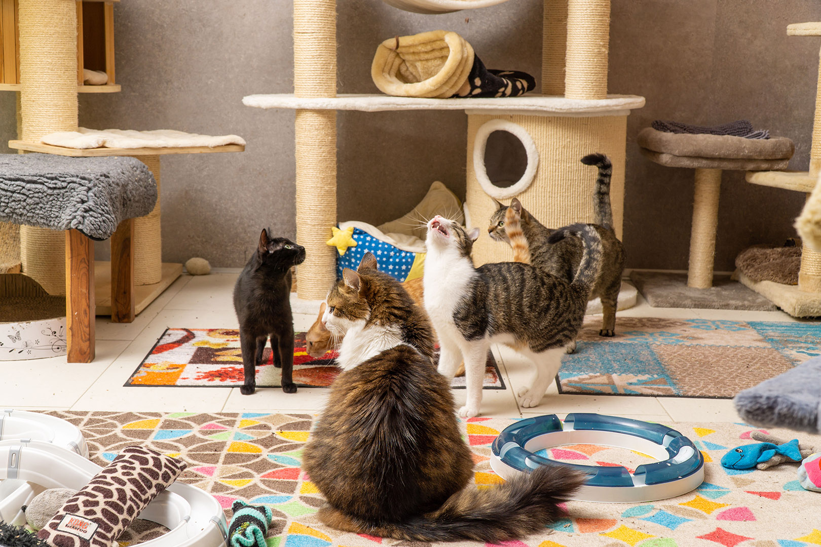 Pflege Katzen Gruppe (11)