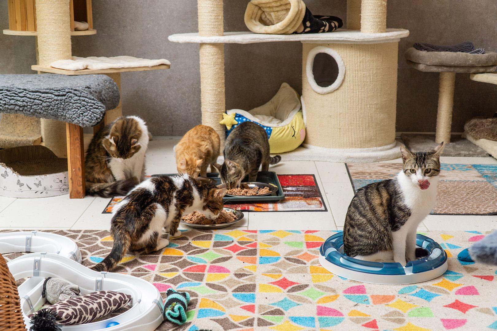 Pflege Katzen Gruppe (12)