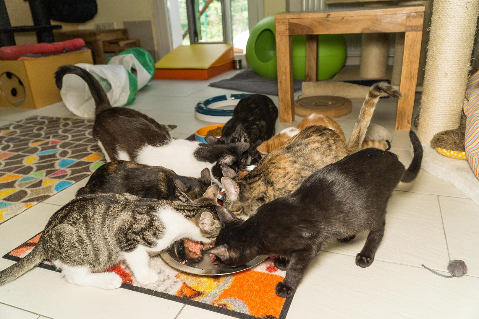 Pflege Katzen Gruppe (2)