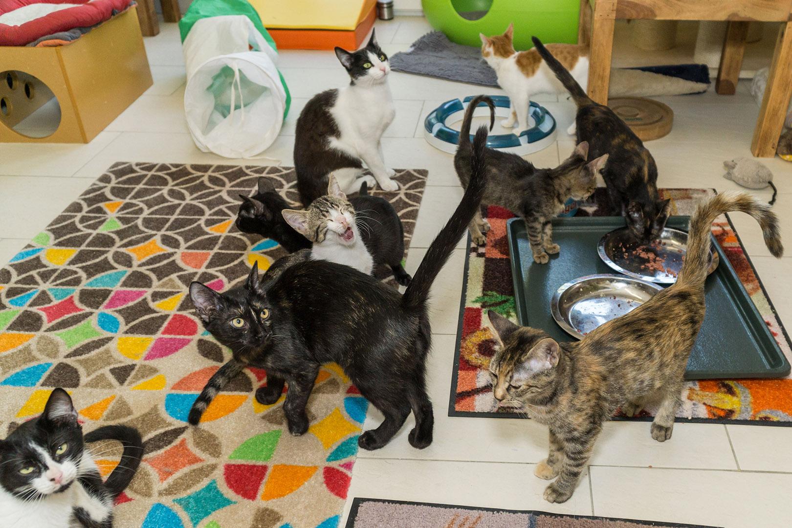 Pflege Katzen Gruppe (3)