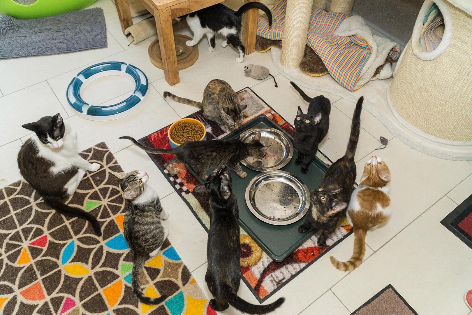 Pflege Katzen Gruppe (4)
