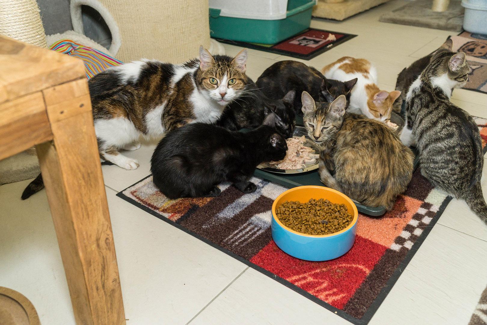 Pflege Katzen Gruppe (5)