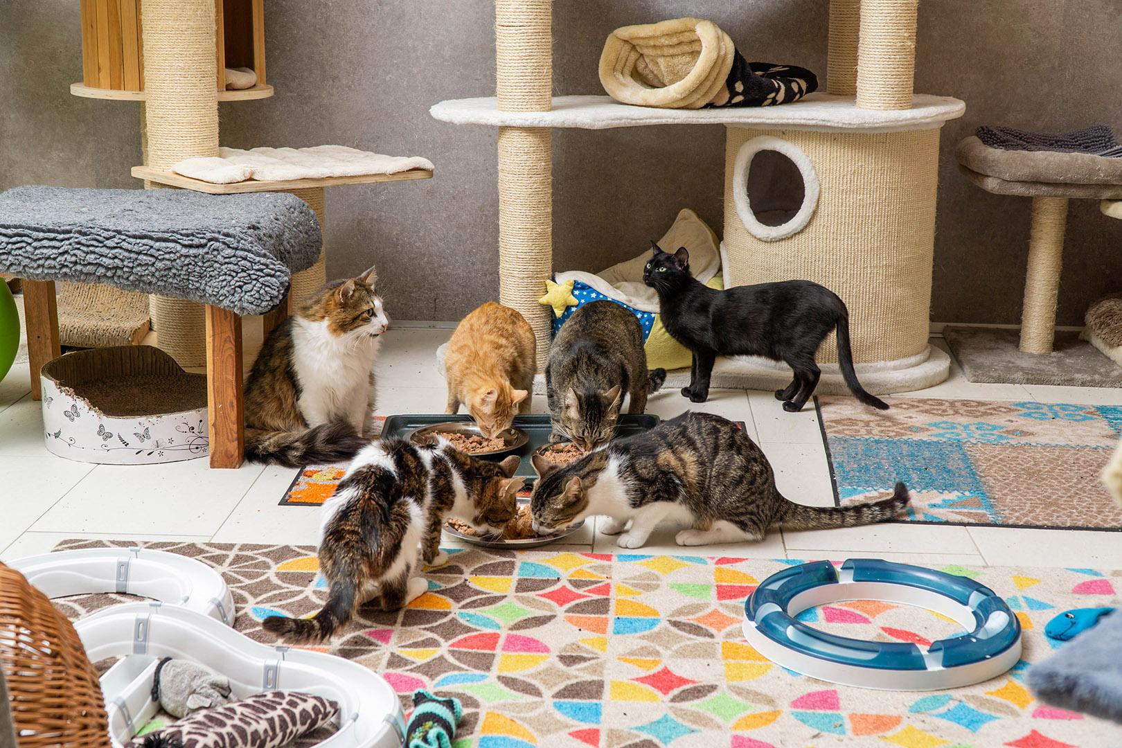 Pflege Katzen Gruppe (6)