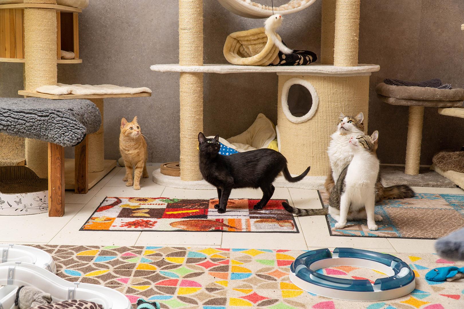 Pflege Katzen Gruppe (7)