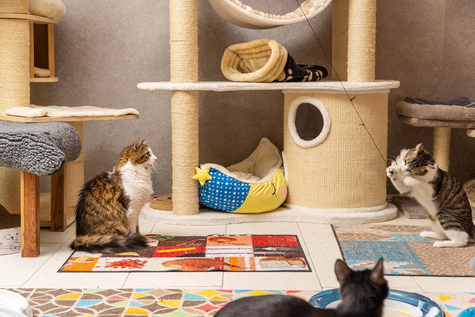Pflege Katzen Gruppe (8)