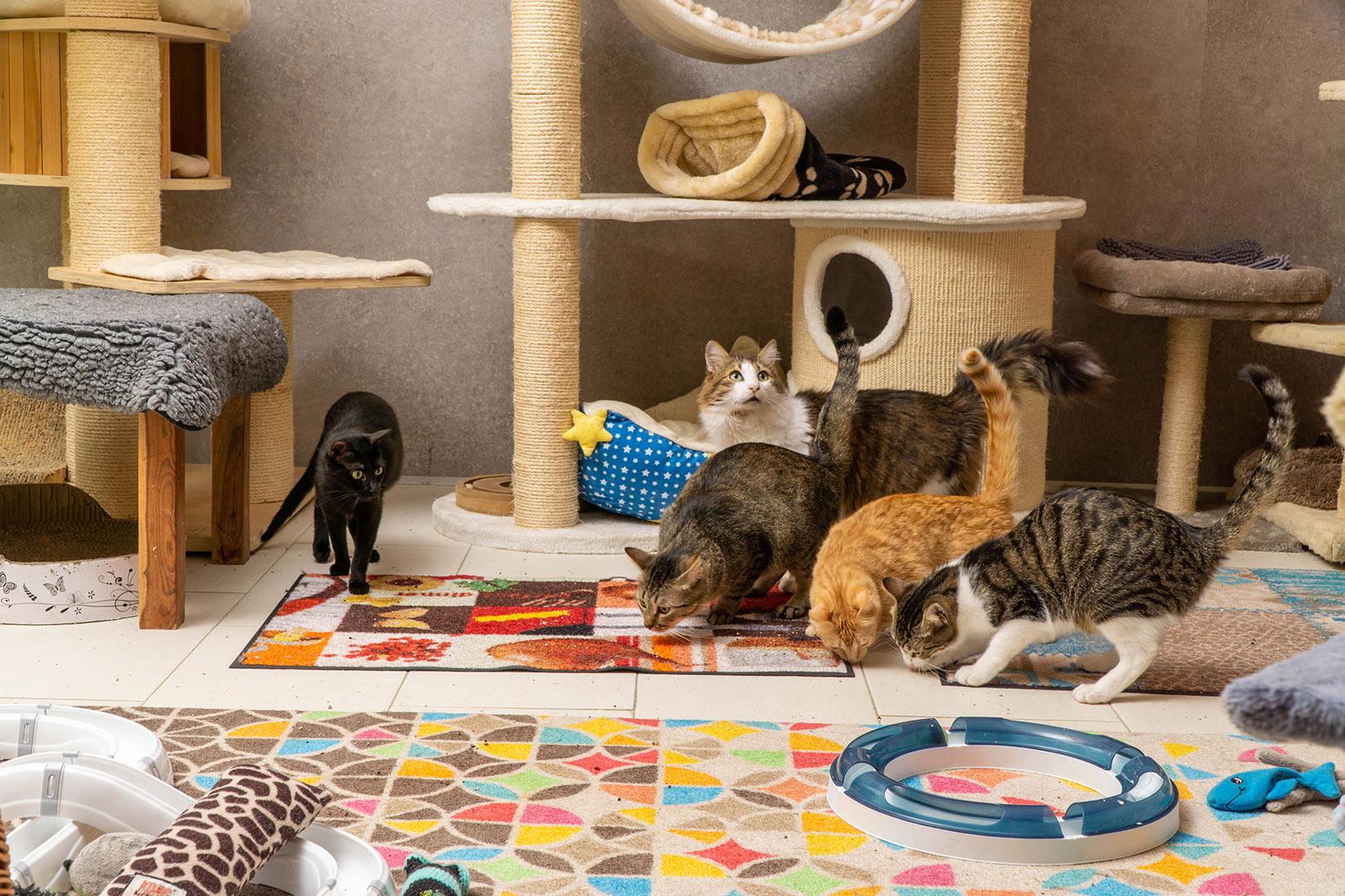 Pflege Katzen Gruppe (9)