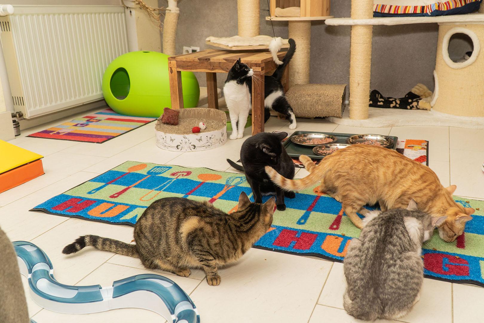 Pflegekatzen Startseite 30.10.18 (11)