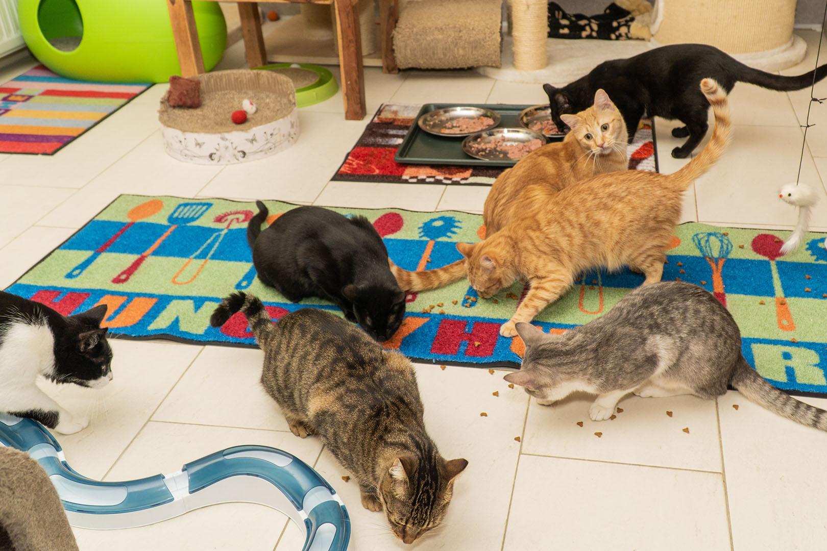 Pflegekatzen Startseite 30.10.18 (14)