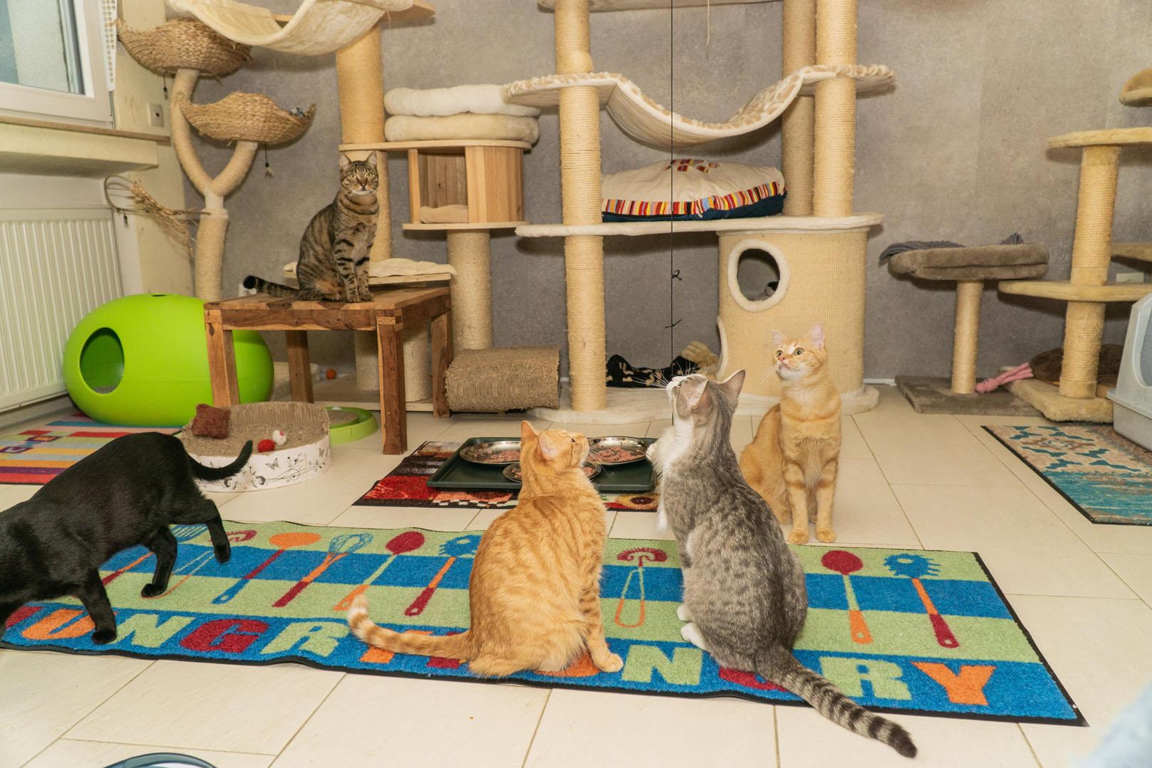 Pflegekatzen Startseite 30.10.18 (5)