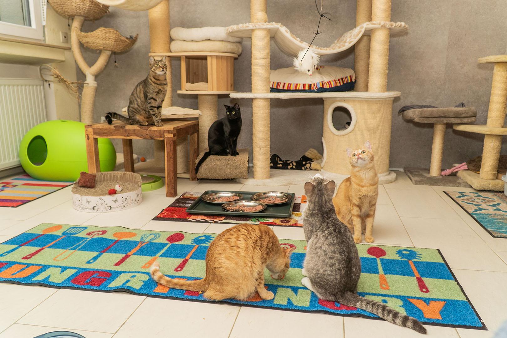 Pflegekatzen Startseite 30.10.18 (6)