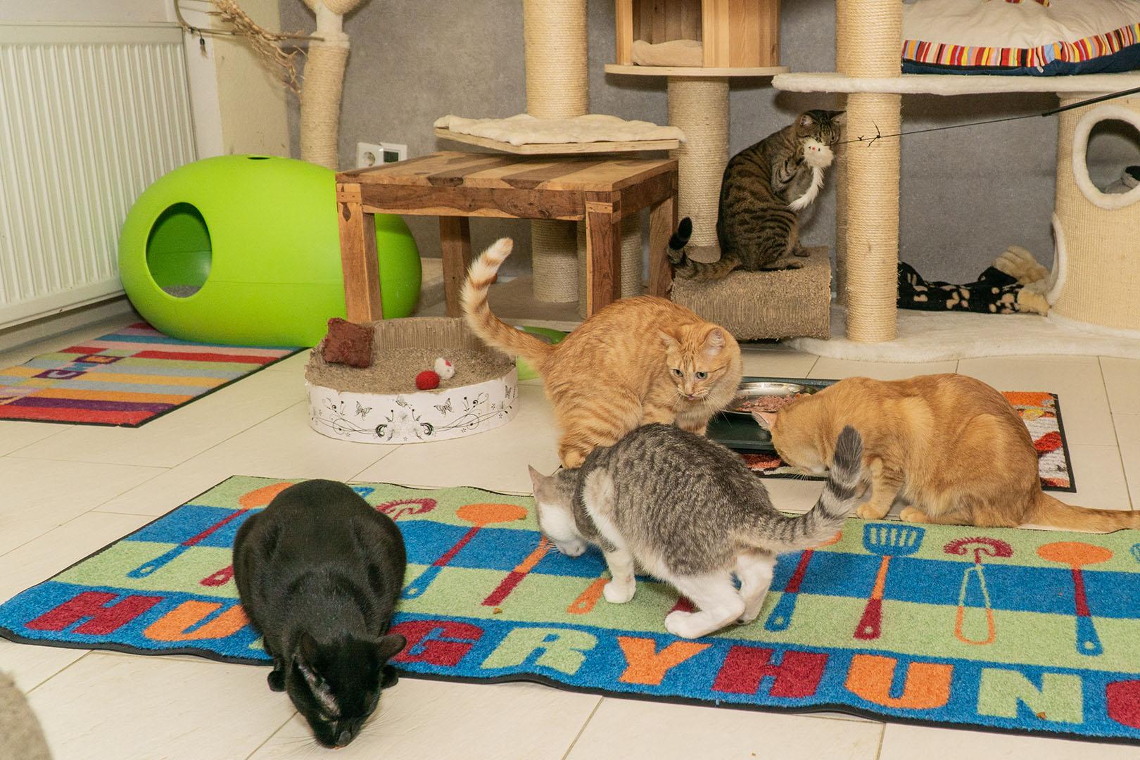 Pflegekatzen Startseite 30.10.18 (8)