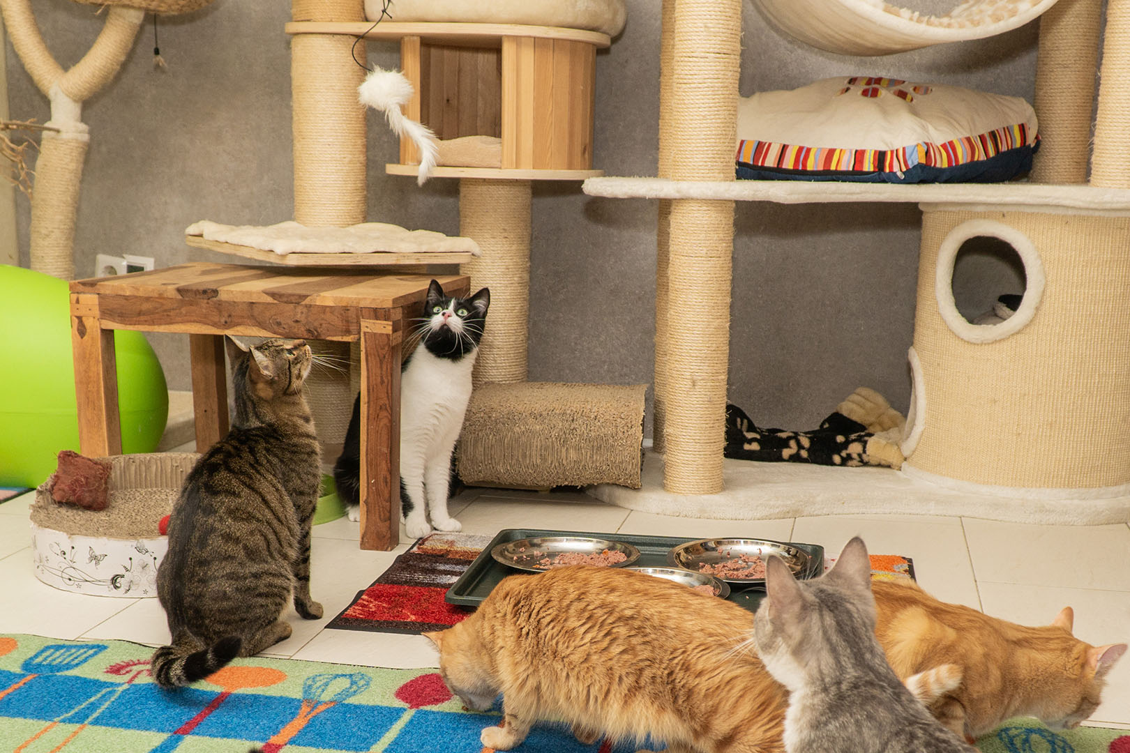 Pflegekatzen Startseite 30.10.18 (9)