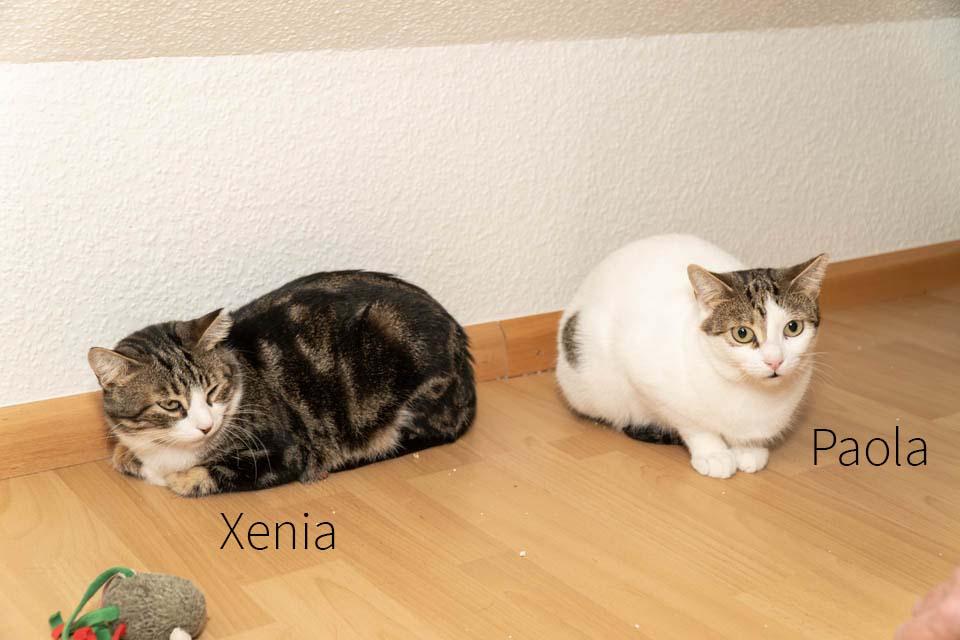 Xenia-Paola Artikel (8)